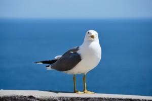 Pest-Bird-2-300x200